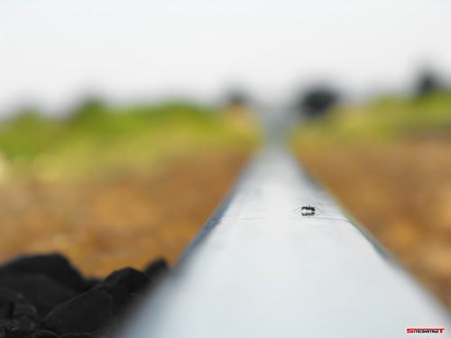 Furnica pe calea ferata